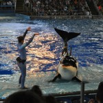 Behind the scenes at SeaWorld Texas