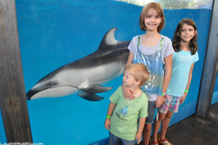 With the dolphins at SeaWorld Texas #adventurecon15 #wildside15