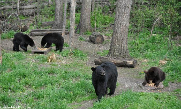 Vince Shute bears