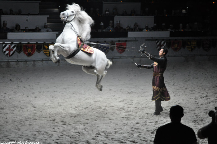 #MTDallas Javier head horse trainer Andalusian Jump