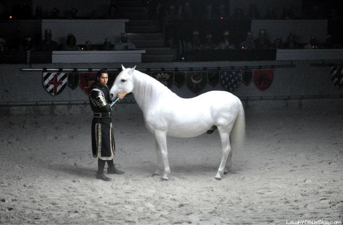 Medieval Times Dallas #MTDallas #MtFan photo shoot Javier horse