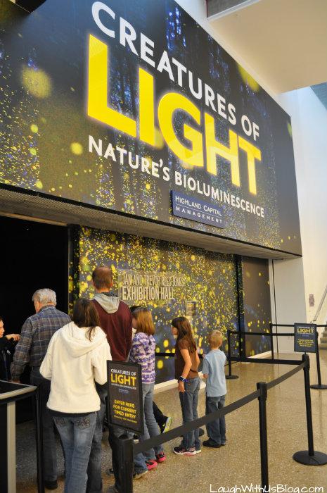 Perot Museum Creatures of Light
