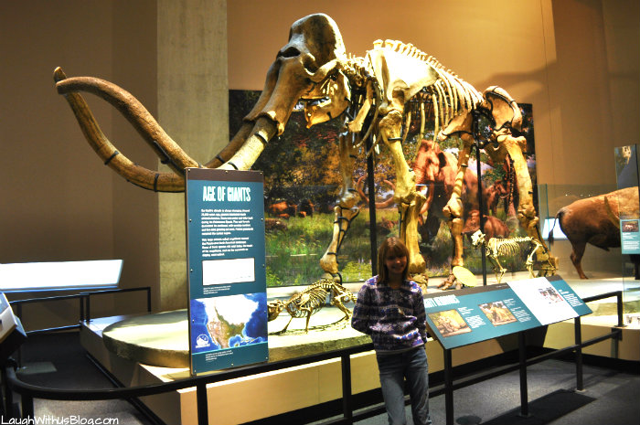 Perot Museum Mammoth
