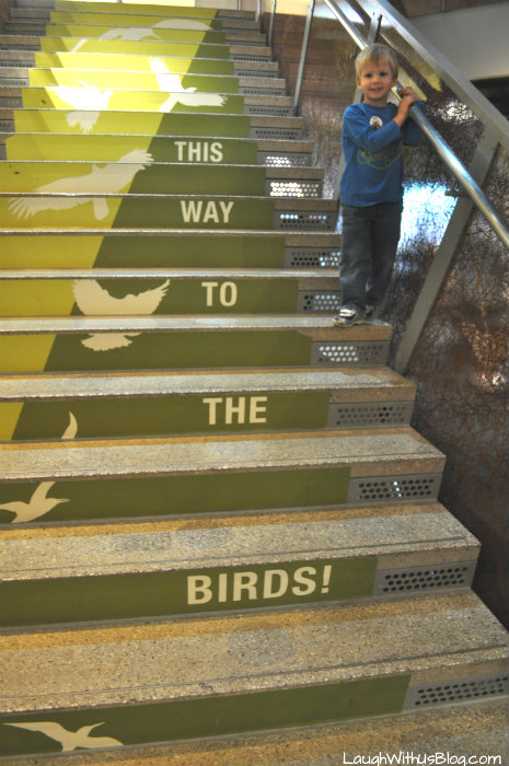 Perot Museum This way to the birds