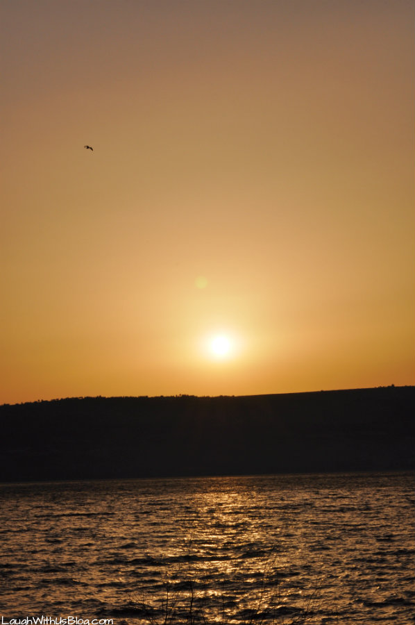 Sunset on the Sea of Galilee with bird