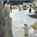 Penguin Tour at SeaWorld Texas