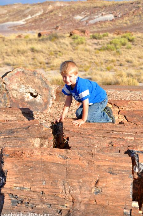 climbing-on-petrified-wood