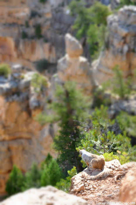 grand-canyon-critters