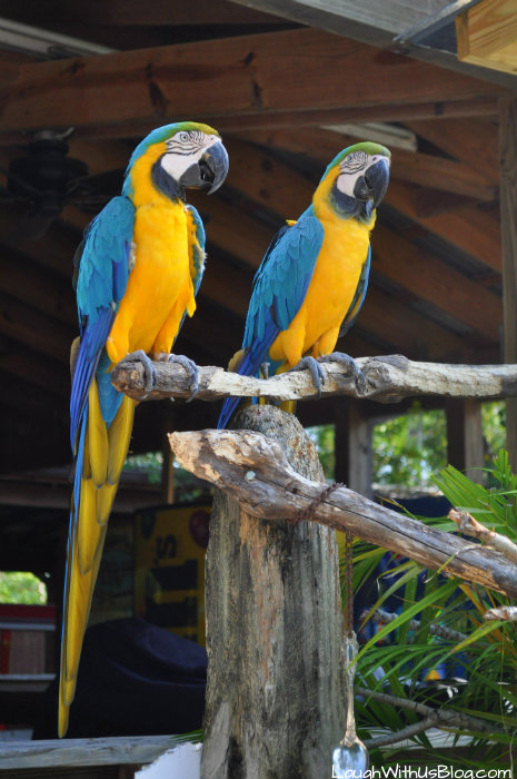 gatorland-parrots