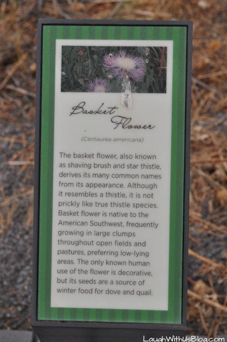 lubbock-lake-landmark-basket-flower