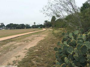 Resaca de la Palma trail cactus