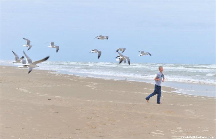 South Padre Seagulls fun