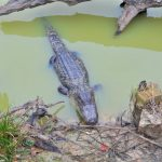 Gator Country Adventure Park in Beaumont, Texas