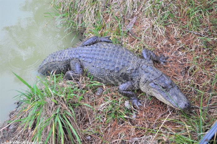 Gator Country Adventure Park Beaumont Texas