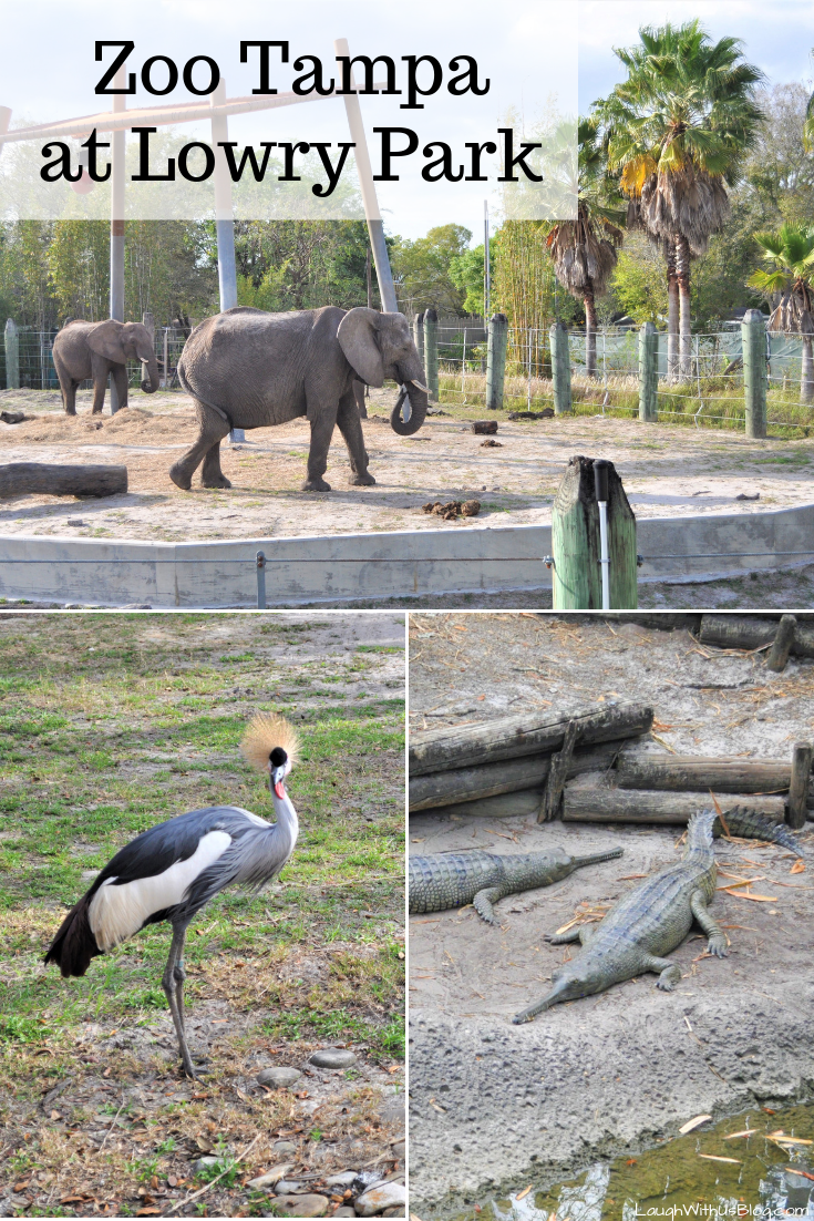 Zoo Tampa at Lowry Park What to see and do