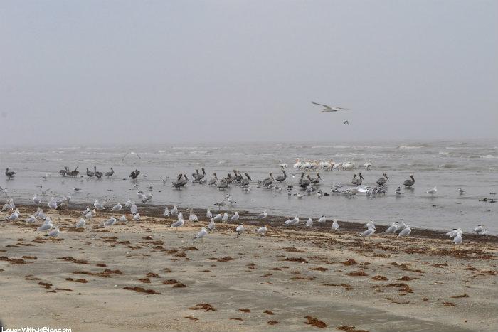Sea Rim State Park Birds