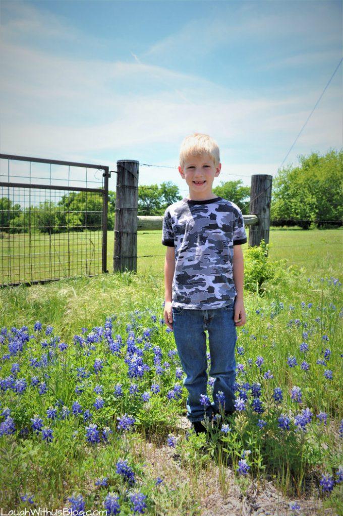 Texas Bluebonnets spring