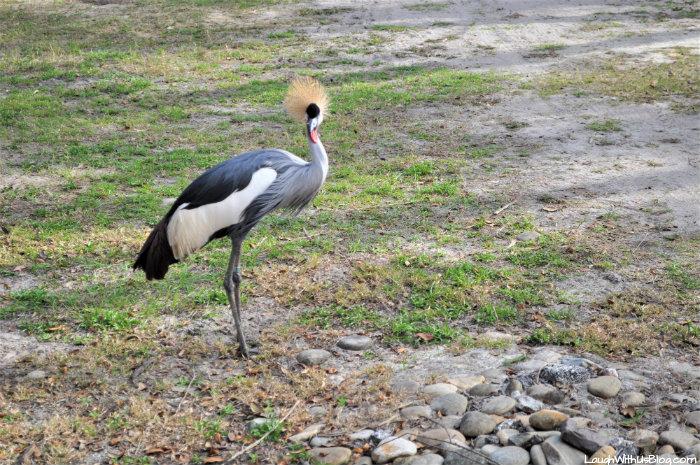 Zoo Tampa at Lowry Park bird animals