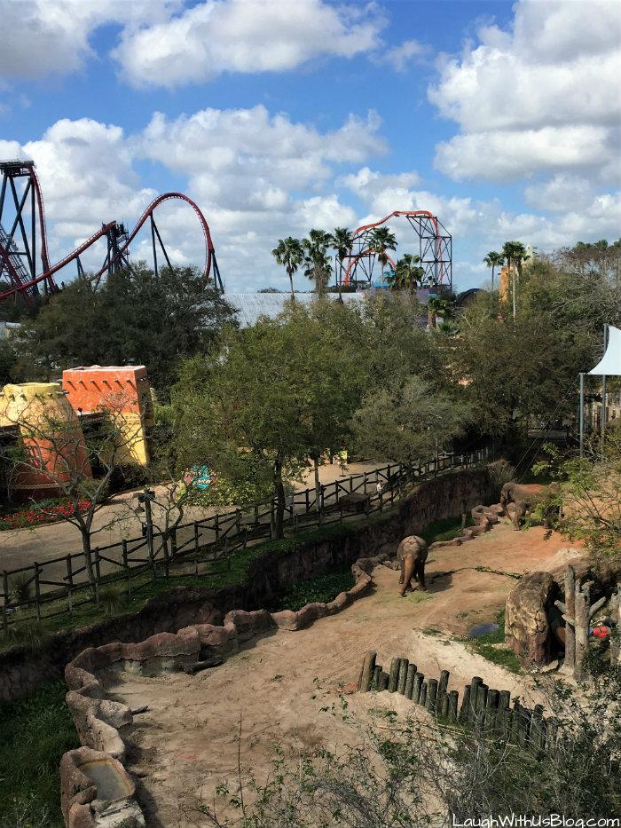 Busch Gardens Tampa Sky Ride View