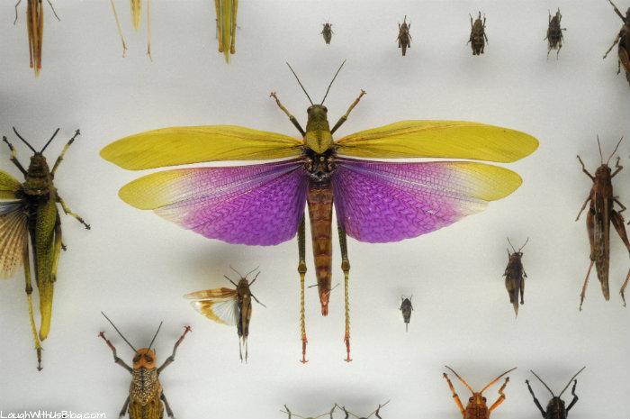 Creation Museum Bug Exhibit