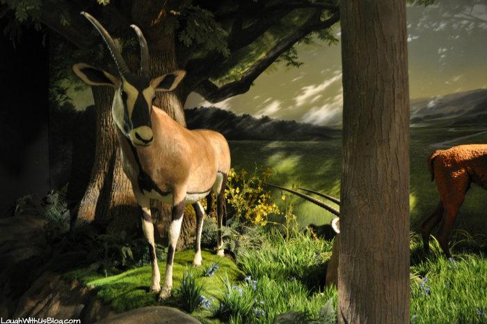 Creation Museum Garden of Eden
