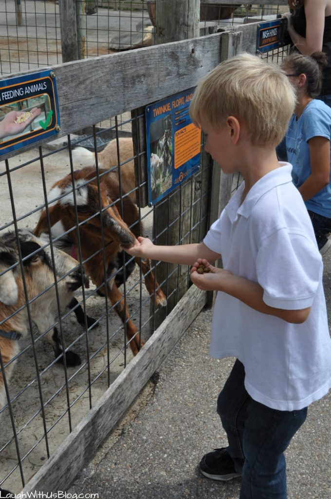 Creation Museum Petting Zoo