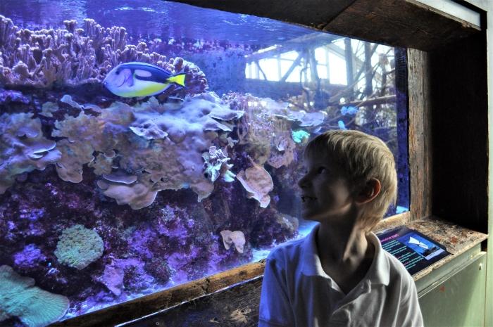 Florida Aquarium Fish