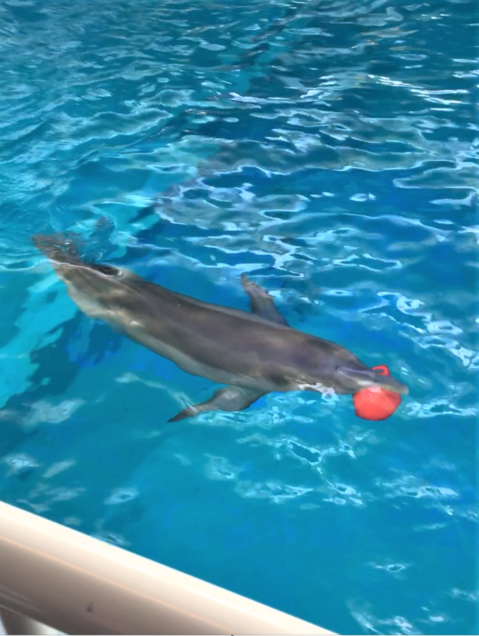 Winter playing at Clearwater Aquarium
